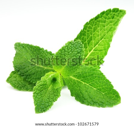 Mint leaf close up on a white background #102671579