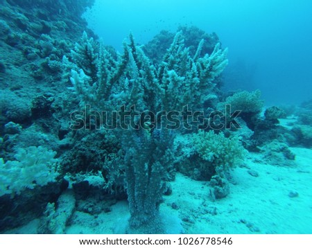 tropical fish and corals underwater #1026778546