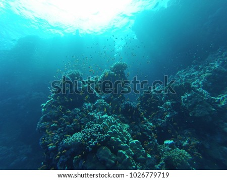 tropical fish and corals underwater #1026779719