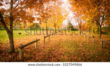 Automn path in south west of France