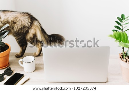 cute cat and laptop on wooden desktop with phone, notebook, coffee cup and plant in stylish modern room. Freelance concept. business workspace in home or office. working home #1027235374