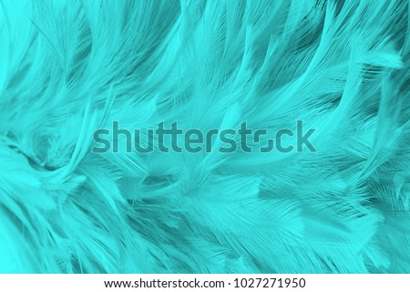 Beautiful green turquoise vintage color trends feather texture background