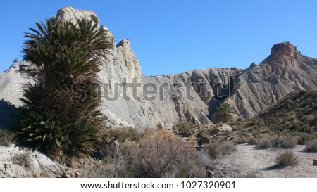 Beautiful canyon with palm tree in Tabernas desert, Andalucia Spain #1027320901
