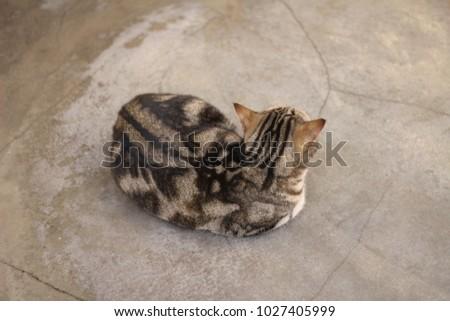 Cute spotted cat #1027405999