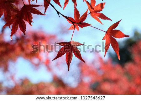 red leaves in the autumn season #1027543627