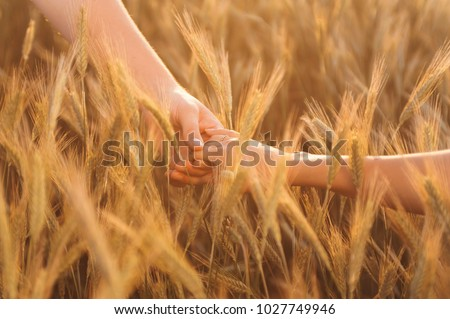 Happy couple in love walking on field of spikes in springtime at sunset. Woman and man holding hands #1027749946