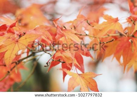 fall season garden at Seiryuden Japanese temple  #1027797832
