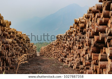 Rows of piled of logs , waiting to be processed, at a local rural lumber mill, made into lumber for construction. #1027887358