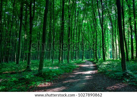 beautiful green forest #1027890862