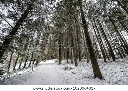 Beautiful winter landscape with snow covered trees #1028064817