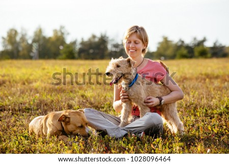 Beautiful young woman is walking in a field with two dogs on a sunny summer day. The Lakeland Terrier dog sits on the hands of a girl, a big red dog lies next to her #1028096464
