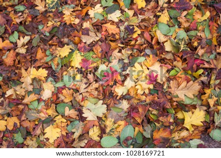 Autumn leaves image #1028169721