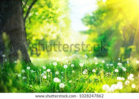 Spring Nature scene. Beautiful Landscape. Park with dandelions, Green Grass, Trees and flowers. Tranquil Background, sunlight. Scenic beauty meadow backdrop #1028247862
