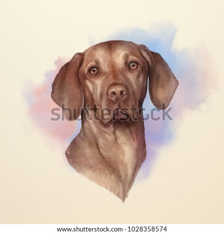 Illustration of a Vizsla dog. Weimaraner. Dog is man's best friend. Animal collection: Dogs. Watercolor Dog Pug Portrait - Hand Painted Illustration of Pets. Art background for banner, cover, card.