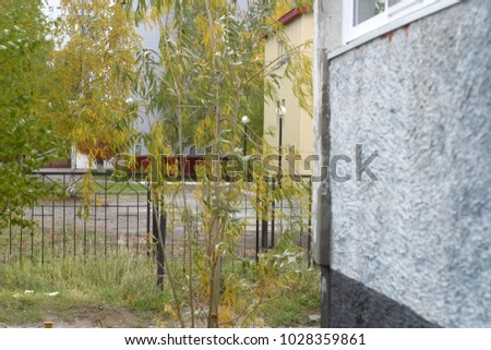 Branches of trees on a city street. Summer and autumn background  #1028359861