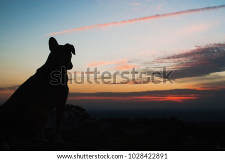 Dog silhouette at sunset in Brazil #1028422891