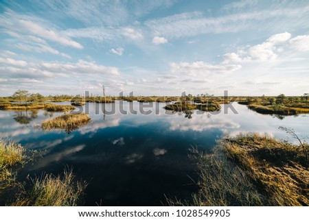 Summer landscape. swamp, marsh, bog, quagmire, morass, backwater. An area of low-lying, uncultivated ground where water collects; A bog or marsh. #1028549905