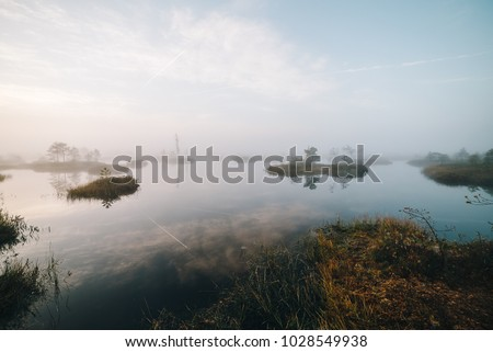Summer landscape. swamp, marsh, bog, quagmire, morass, backwater. An area of low-lying, uncultivated ground where water collects; A bog or marsh. #1028549938