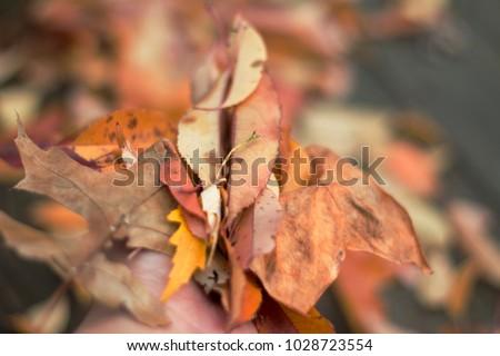 leaves full a hand #1028723554