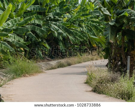 Small road in the countryside at Thailand #1028733886