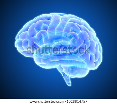 3D blue purple glowing xray brain illustration isolated on dark background with clipping path for die cut to use in any backdrop