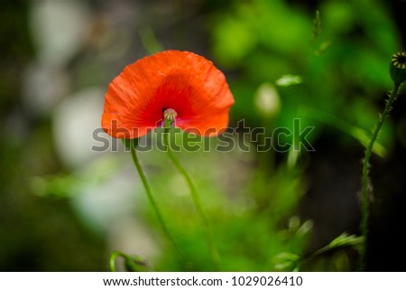 spring flowers - violets, roses, poppies #1029026410