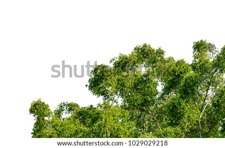 Green leaves part of tree isolate on white background #1029029218