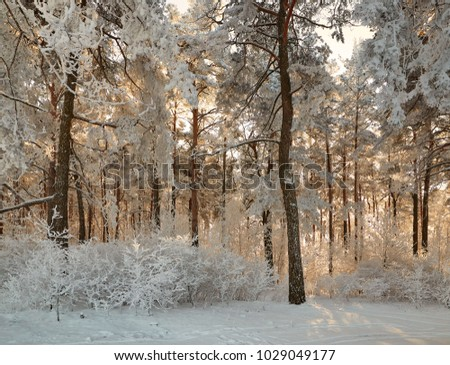 winter forest with snow-covered branches of trees. fairy beauty #1029049177