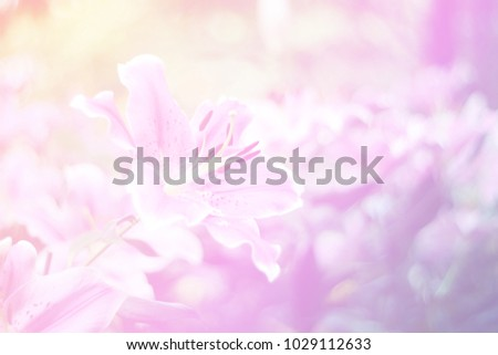 Beautiful abstract sweet color of floral with pink flower buds,  pastel color style for background. #1029112633