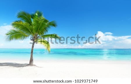 Palm on the beach, Dominican republic Royalty-Free Stock Photo #1029371749