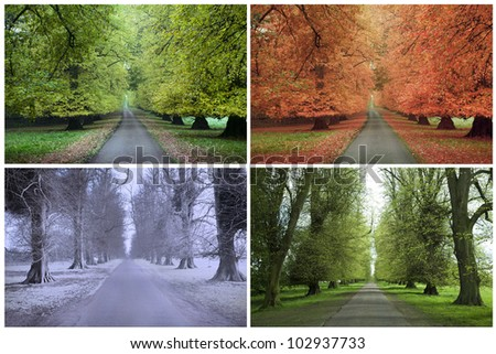 Four Seasons of a Row of Lime Trees Royalty-Free Stock Photo #102937733