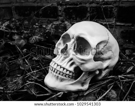 Selective focus image of human skull with leaves background / Blurred, and Selective focus, Still Life image.
