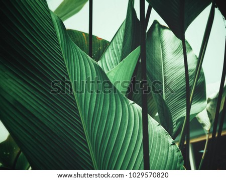 Beautiful of green tropical leaves #1029570820