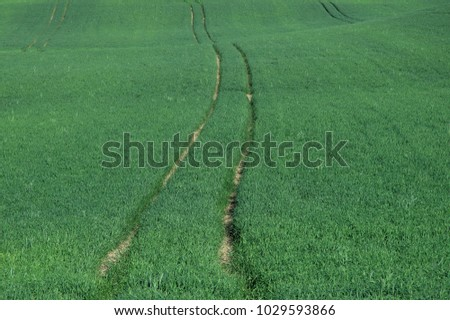 Minimalistic green landscape with half grown rye field and curved lines made by tractor or other vehicle #1029593866