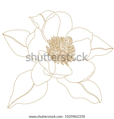 Magnolia flower, top view, isolated on white.Graphical hand drawn magnolia flowers. Vector.Magnolia flower drawing and sketch with black and white line-art. #1029862330