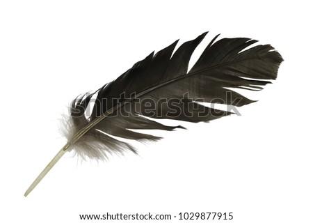 Beautiful feather isolated on white background #1029877915