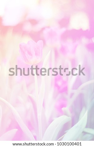 Beautiful abstract sweet color of floral with pink flower buds,  pastel color style for background. #1030100401