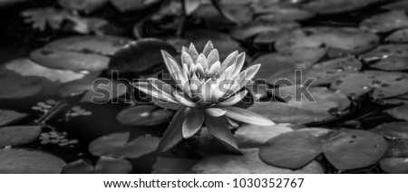 loto flower black and white #1030352767