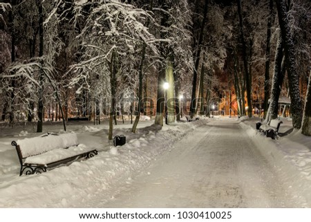 Winter park at night with decorations, lights, benches and trees. Christmas spruce on a baxhground. #1030410025