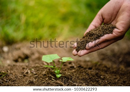 Hands holding soil to plant a young tree. Earth Day concept. #1030622293