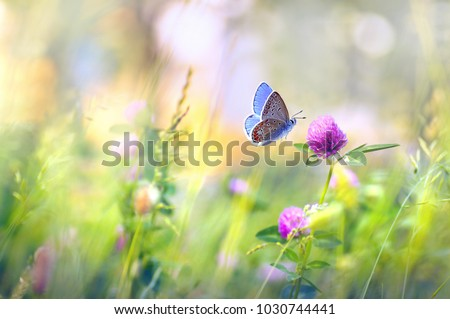 Wild flowers of clover and butterfly in a meadow in nature in the rays of sunlight in summer in the spring close-up of a macro. A picturesque colorful artistic image with a soft focus Royalty-Free Stock Photo #1030744441