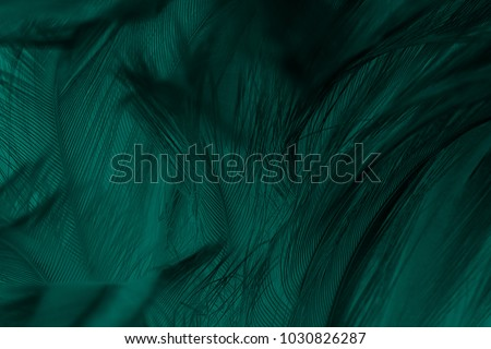 Beautiful dark green viridian vintage color trends feather texture background #1030826287
