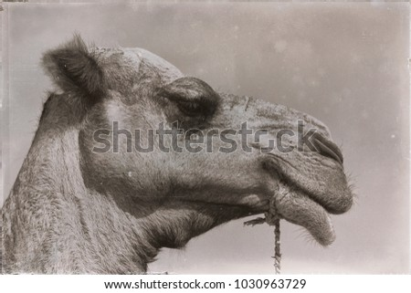 in  ethiopia africa   camel in the sky like abstract background #1030963729