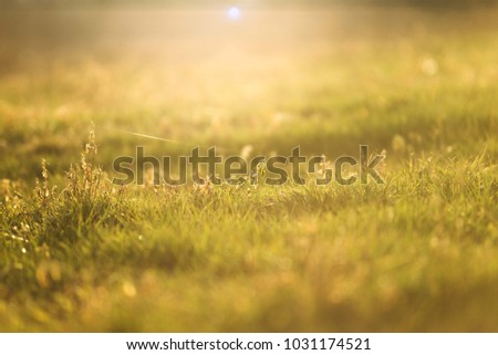 grass field with sunset colors #1031174521