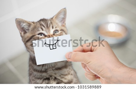 funny cat with smile on cardboard sitting near food #1031589889