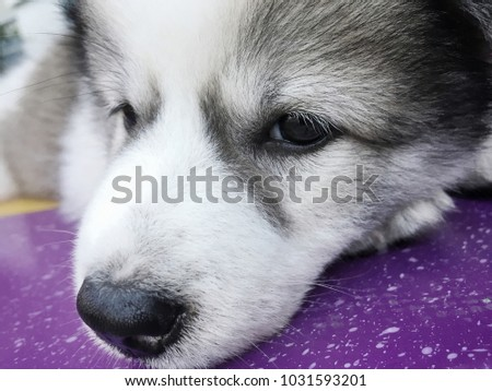 The dog is sad.
