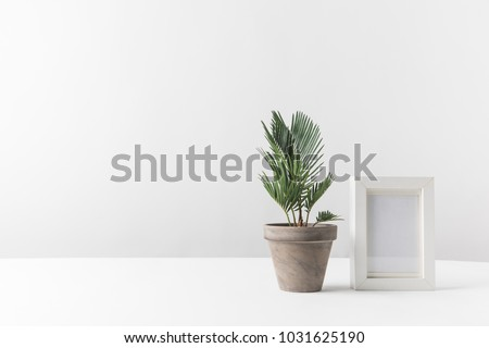 beautiful green potted plant and empty photo frame on white #1031625190