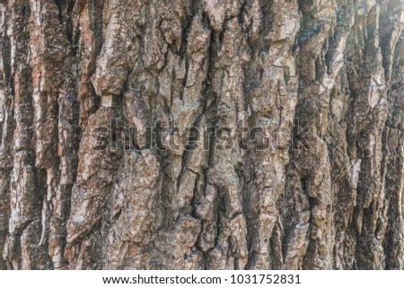 Black poplar bark with dry moss and lichen #1031752831