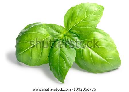 Fresh Basil leaves (Ocimum basilicum). Shadows separated, clipping path: goo.gl/qQ88ZY #1032066775