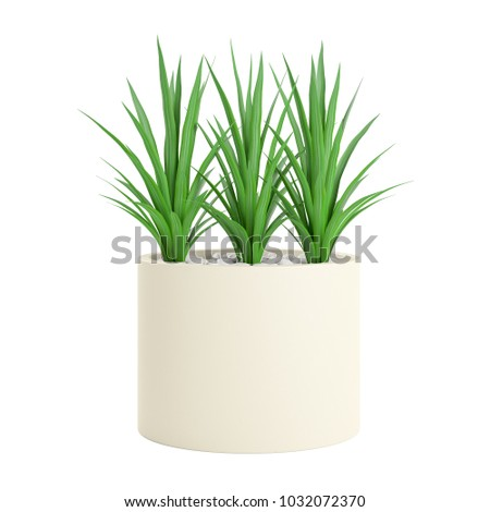 Decorative Palm plant planted white ceramic pot isolated on white background. 3D Rendering, Illustration.  #1032072370